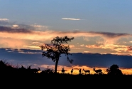 Mike Palmer - Impala Sunset-1.jpg