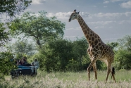 Mike L - Giraffe safari.jpg