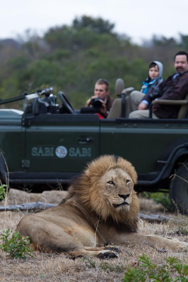 male lion while on safari at sabi sabi private game reserve