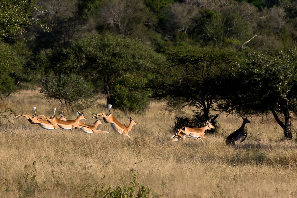 faster. higher. stronger. | Sabi Sabi Private Game Reserve ...