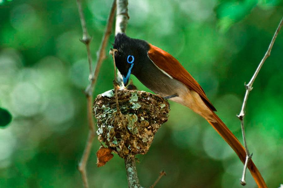 Rare Birds Of Paradise bird of paradise | Sab...