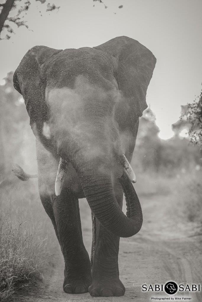 12mike-palmer-elephant-bull-final