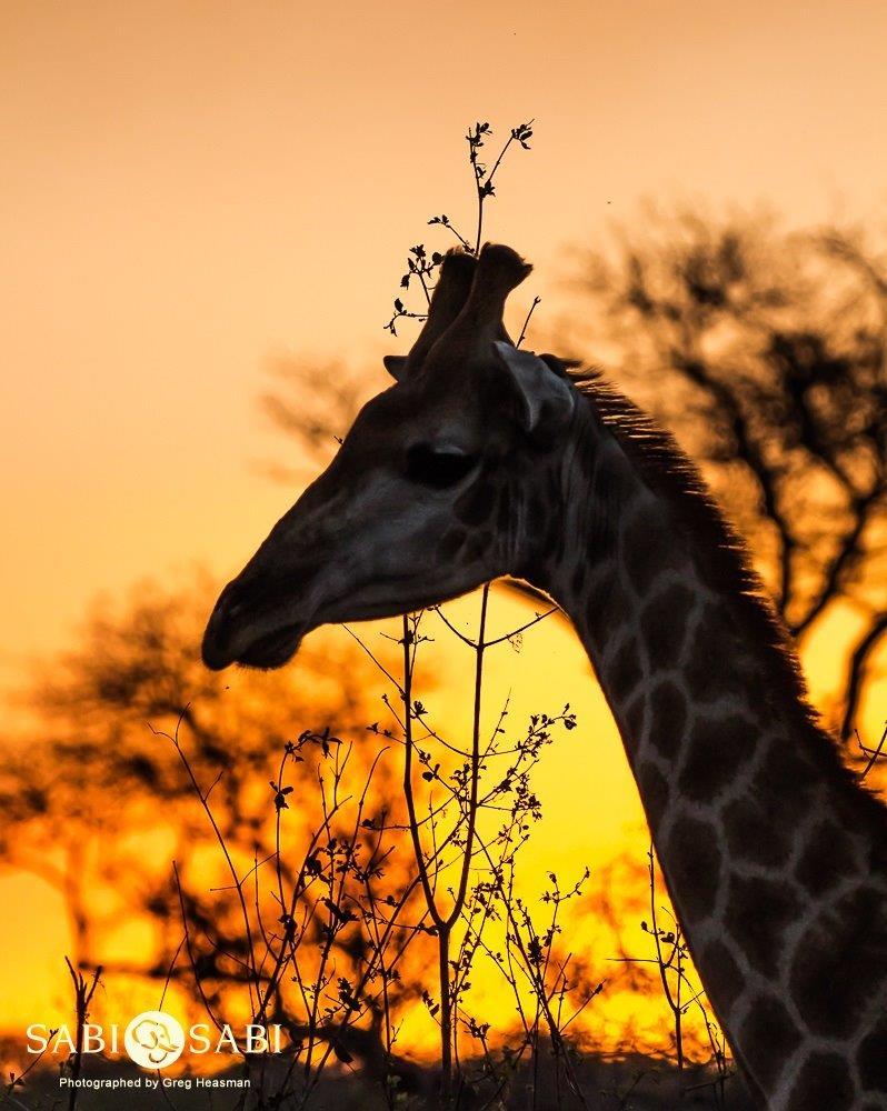 safari sunset at sabi sabi private game reserve