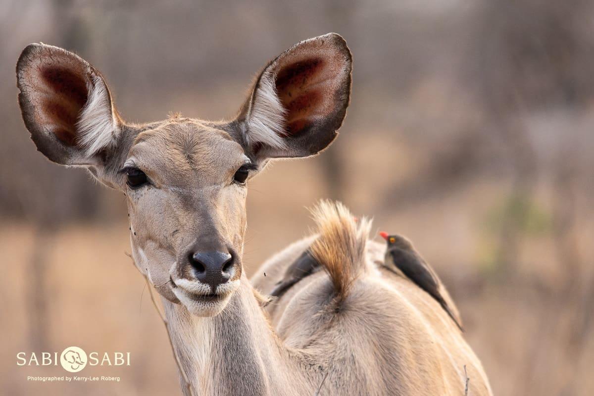 The life we chose:  Why Safari?