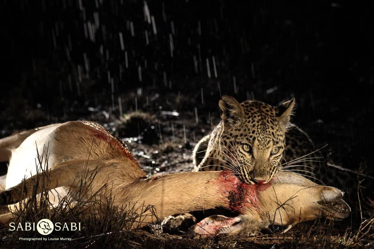 An ultimate safari experience!