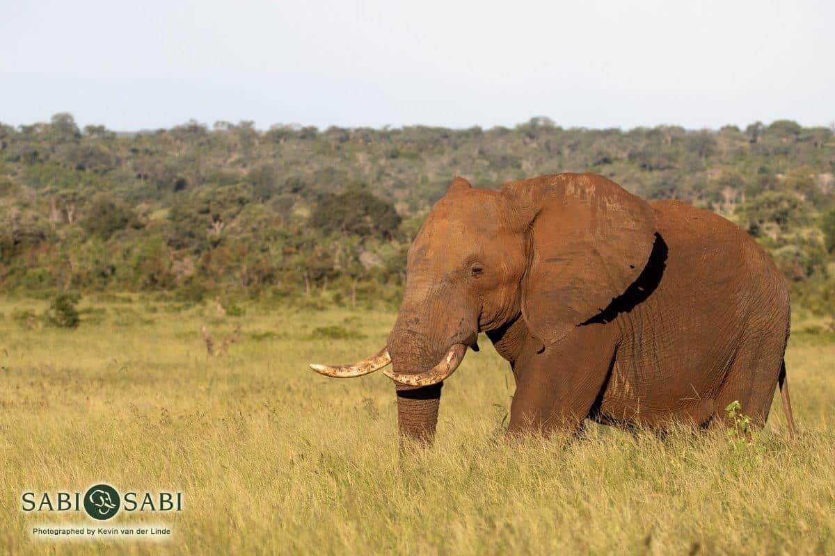 elephant at sabi sabi private game reserve