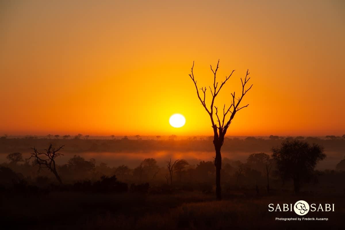 sabi sabi safari sunrise