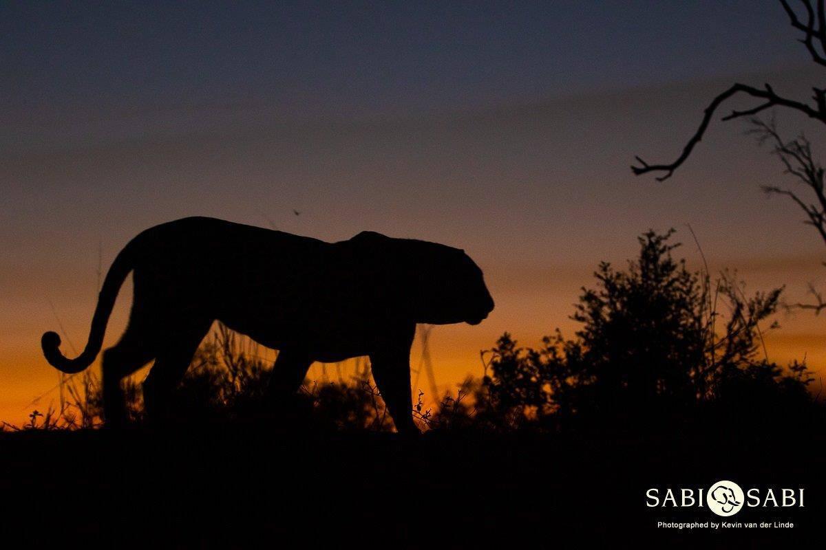 leopard while on night safari at sabi sabi