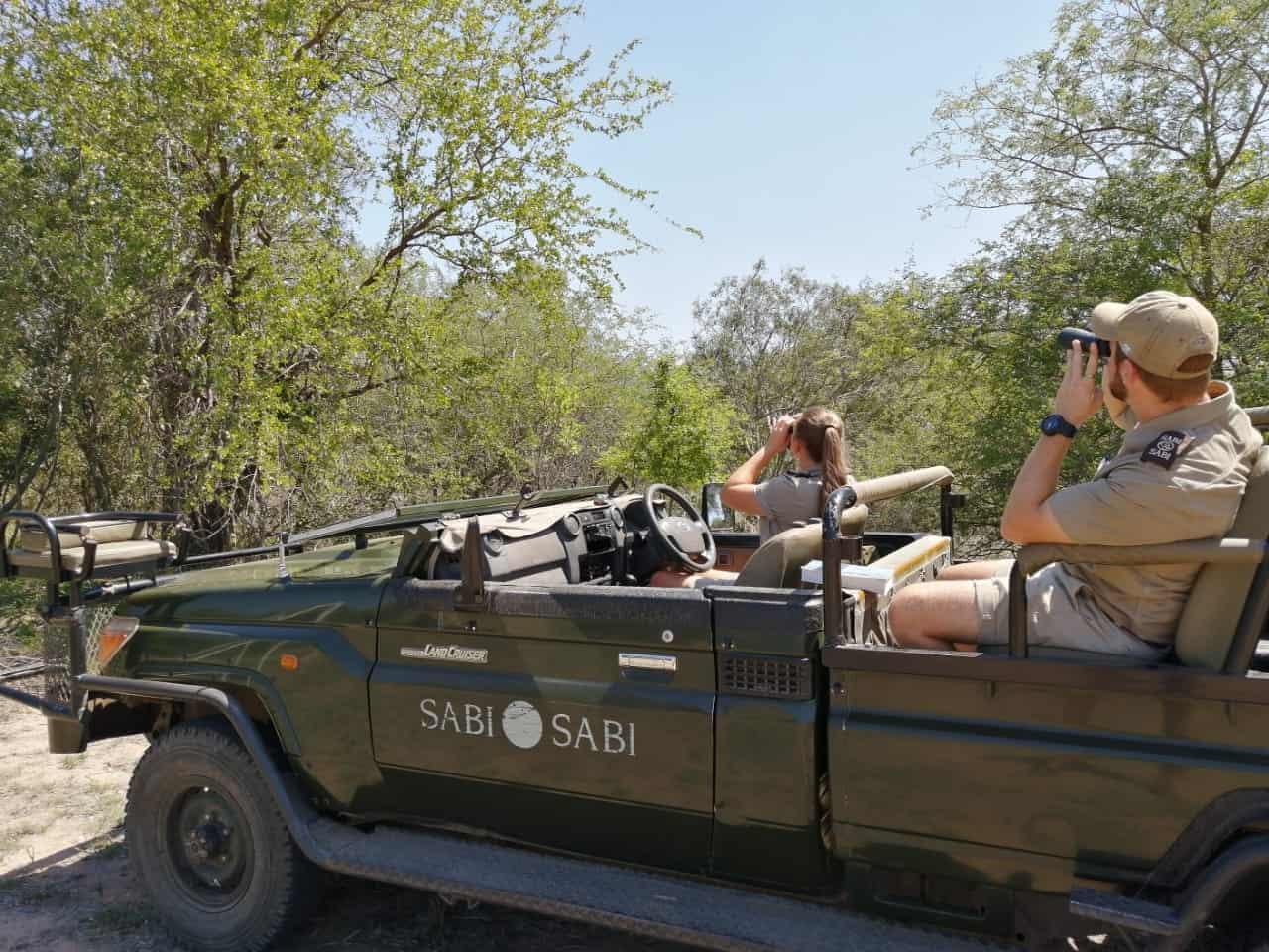 sabi sabi game rangers birding safari