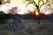 Zebra Sunset.jpg