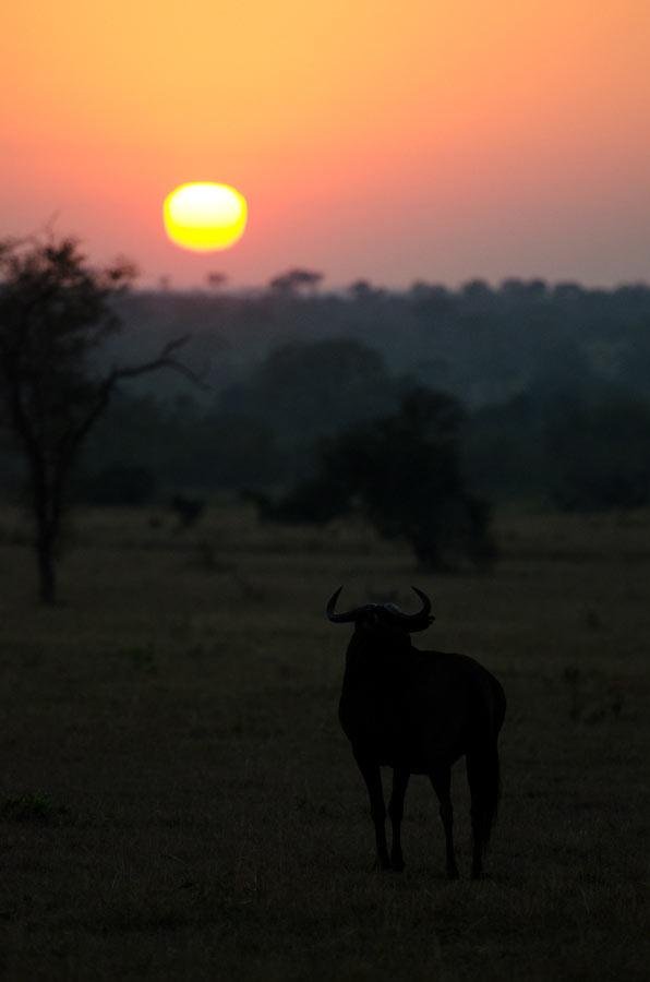 10July2012---Wildebeest-sunrise---unedited