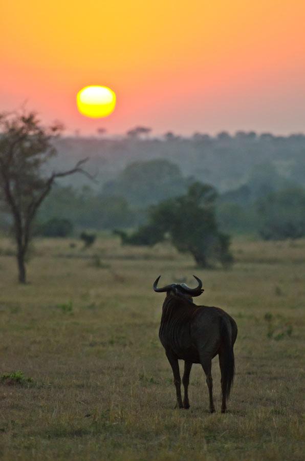 10July2012---Wildebeest-sunrise