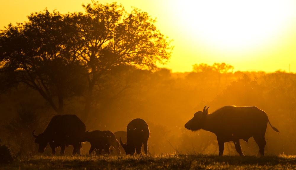 11Dec12---Buffalo-sunset