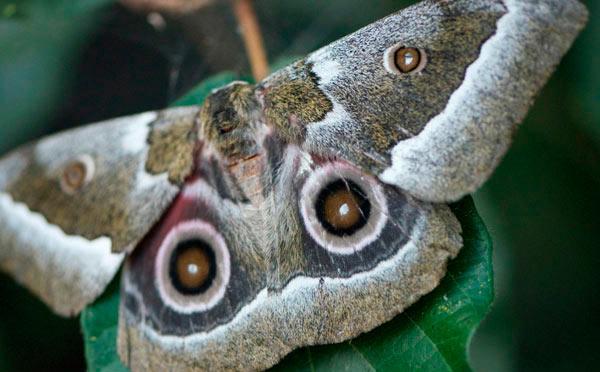 17April12---Moth-1