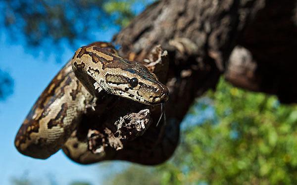 20March12-Southern-African-Python---Wim-Vorster