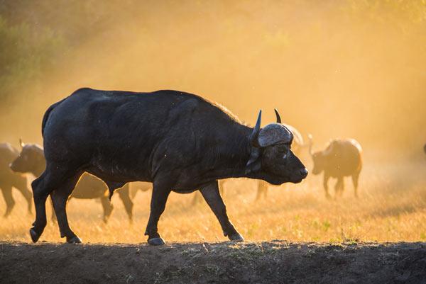 Buffalo-Rich-news