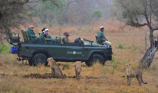 Cheetah-and-safari-newsletter