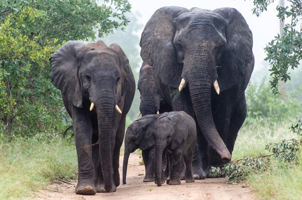 Elephant-(13)-news