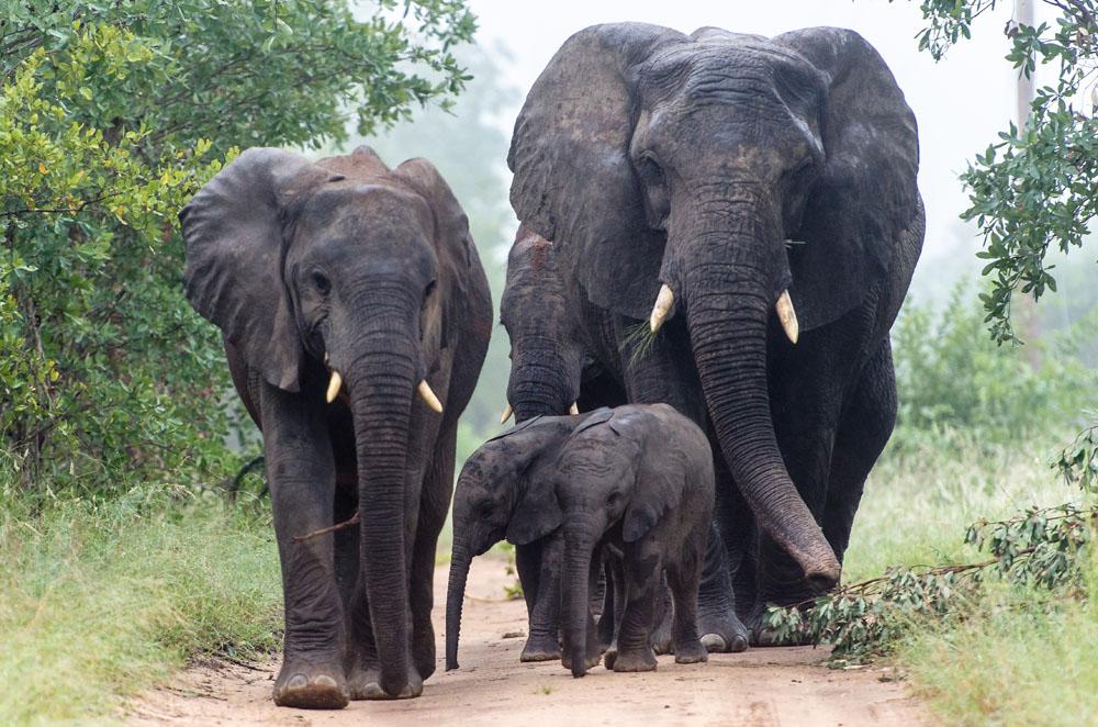 Elephant (13)_1