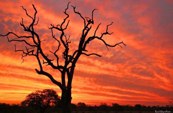 bush-medi-sunset