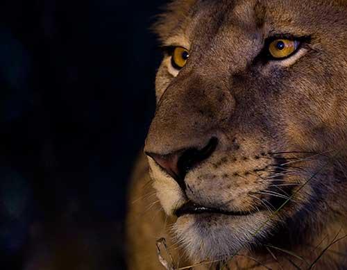 lionbigph
