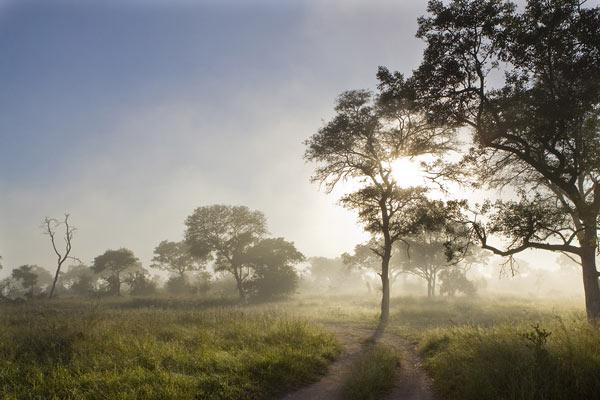 misty-morning-news