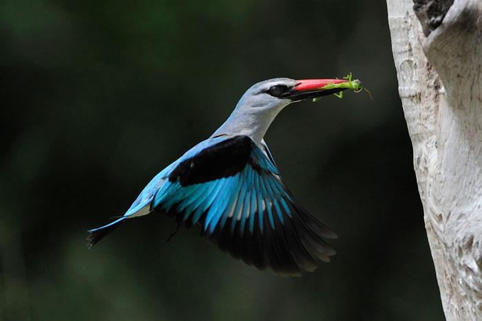 tricky-kingfisher-lrg