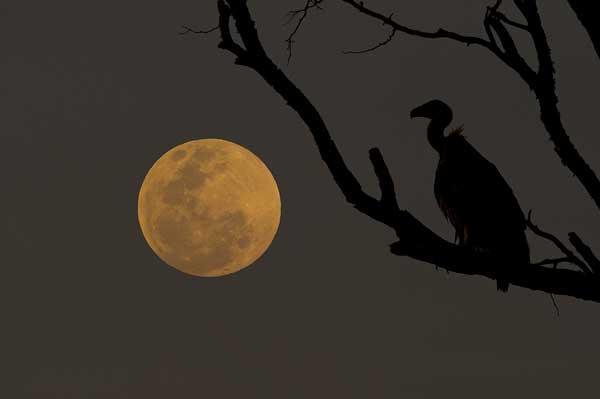 vult-moon-stargazing