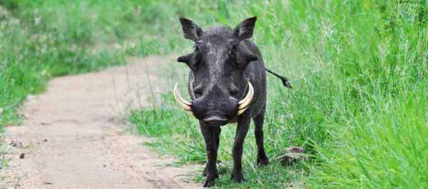warthog-news5
