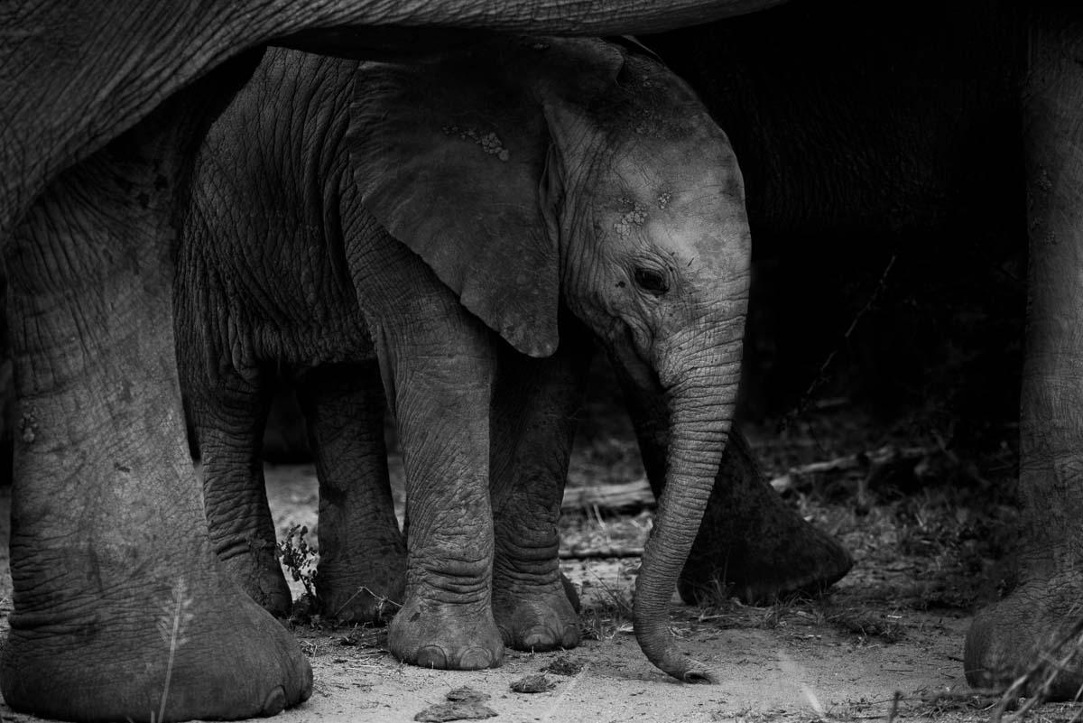 natural framing photography. Elephant Family At Sabi Private Game Reserve Natural Framing Photography O