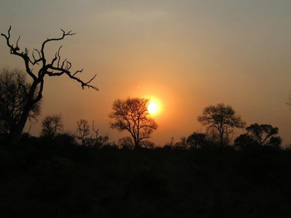 Sabi Sabi Guests on Safari Game Drive with sunset