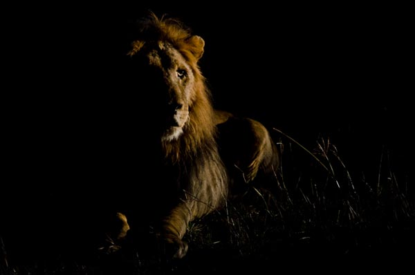 low light photography at sabi sabi
