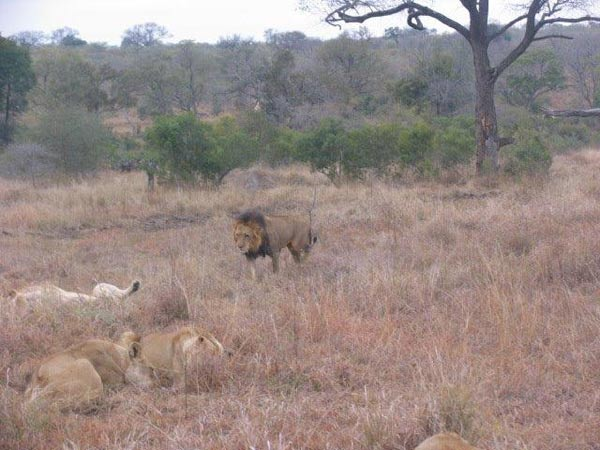 Aker family on safari at Sabi Sabi Private Game Reserve