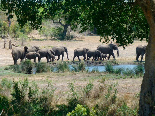 Guest safari experience at Sabi Sabi
