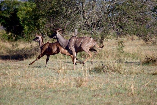 Sabi Sabi Guest Safari Experience