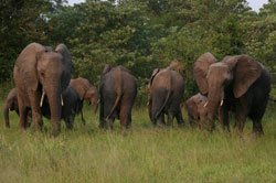 herd of elephants while on safari at sabi sabi private game reserve