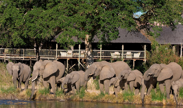 Elephant infront Bush Lodge