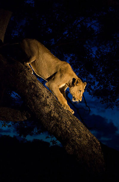 Side light for a Lioness
