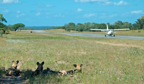 Safari fly-in packages