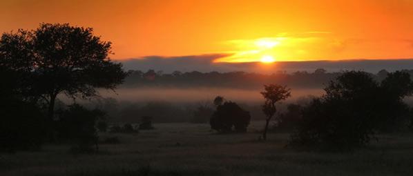 bushveld-sunset