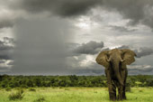 elephant at Sabi Sabi Luxury Safari Lodges